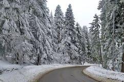 De weg van de berg door bos in de winter. De berg van Rila, Borovetz Royalty-vrije Stock Foto's