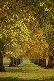 De Weg van de beuk in een Engels Park van het Land Royalty-vrije Stock Foto