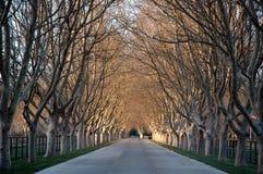 De Weg van de boerderij Royalty-vrije Stock Foto's
