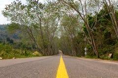 De weg van de boomtunnel Royalty-vrije Stock Fotografie