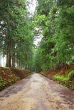 De weg van de ceder van Nikko stock afbeeldingen