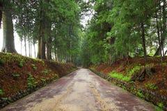 De weg van de ceder van Nikko royalty-vrije stock foto