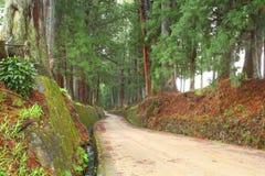 De weg van de ceder van Nikko stock foto