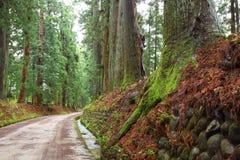De weg van de ceder van Nikko stock afbeelding