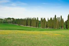 De weg van de cipres Royalty-vrije Stock Fotografie