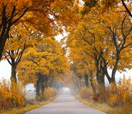 De weg van de daling. stock fotografie