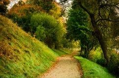 De weg van de daling in bos stock afbeelding