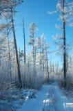 De weg van de de winterzonsondergang Stock Foto