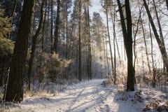De weg van de grond met spoor door sneeuwwintertijdbos Royalty-vrije Stock Afbeelding
