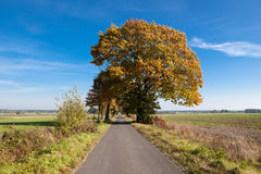 De Weg van de herfst Stock Foto
