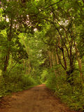 De weg van de herfst in bos stock afbeelding