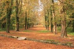 De weg van de herfst door een bos stock afbeelding