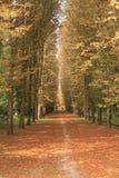 De weg van de herfst door een bos Stock Foto