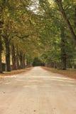 De weg van de herfst door een bos Stock Foto's