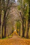 De weg van de herfst, Frankrijk Stock Afbeeldingen