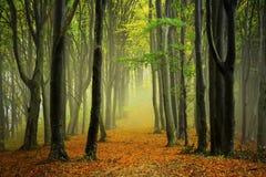 De weg van de herfst in het bos royalty-vrije stock foto