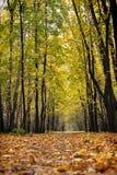 De weg van de herfst in het hout Royalty-vrije Stock Afbeeldingen