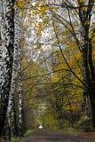 De weg van de herfst in het hout Stock Afbeelding