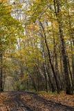 De weg van de herfst in het hout Stock Foto