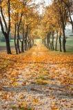 De weg van de herfst Stock Afbeelding