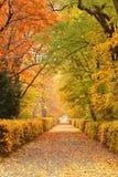 De weg van de herfst in park Stock Fotografie