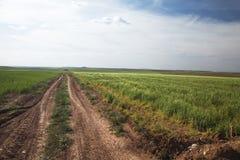 De weg van de landbouw Royalty-vrije Stock Foto's
