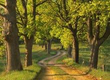 De weg van de lente Royalty-vrije Stock Foto's