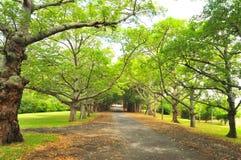 De Weg van de manor Royalty-vrije Stock Foto