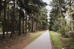 De weg van de naaldboom Royalty-vrije Stock Foto's