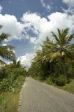 De weg van de palm royalty-vrije stock afbeelding