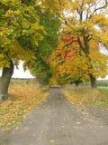 De weg van de provincie Royalty-vrije Stock Afbeeldingen
