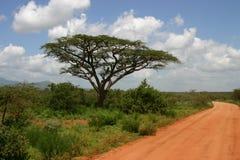 De weg van de safari Stock Fotografie