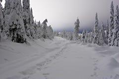 De weg van de sneeuw Stock Fotografie
