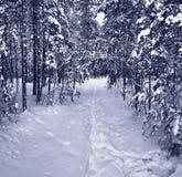 De weg van de sneeuw in de winterbos Royalty-vrije Stock Afbeelding