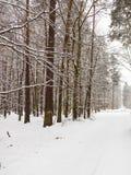 De weg van de sneeuwsteeg in de winterbos Stock Afbeeldingen