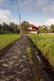 De weg van de steen die door padievelden, Bali wordt omringd Royalty-vrije Stock Afbeelding