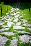 De weg van de steen en groen gras in de zomertuin Royalty-vrije Stock Foto