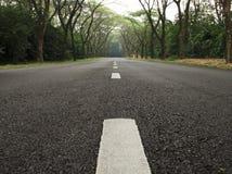 De Weg van de teer met Bomen Royalty-vrije Stock Foto's