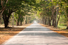 De Weg van de Tunnel van de boom. Stock Fotografie