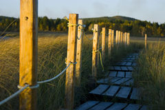 De weg van de vlotter in moeras Royalty-vrije Stock Foto's