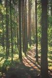 De Weg van de wandeling Stock Afbeelding