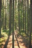 De Weg van de wandeling Stock Fotografie