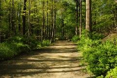 De weg van de wandeling door een bos stock afbeeldingen