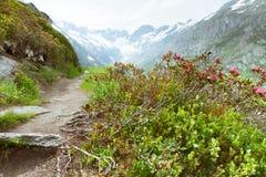 De weg van de wandeling in Goscheneralpsee Royalty-vrije Stock Afbeelding