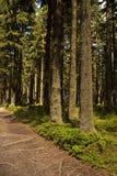 De weg van de wandeling in het bos Royalty-vrije Stock Foto's