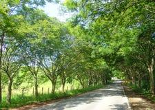 De weg van de weg van bomen Royalty-vrije Stock Foto