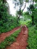 De Weg van de wildernis Stock Foto's