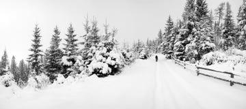 De weg van de winter in bos Royalty-vrije Stock Afbeeldingen