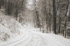 De weg van de winter in het bos Stock Foto's
