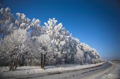 De weg van de winter met berijpte bomen en rijp Royalty-vrije Stock Afbeeldingen